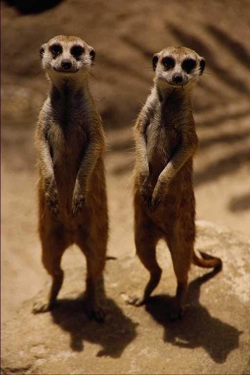 "bbc的动物世界有一集是讲非洲的"""